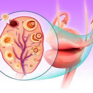 Ovulation natural signs